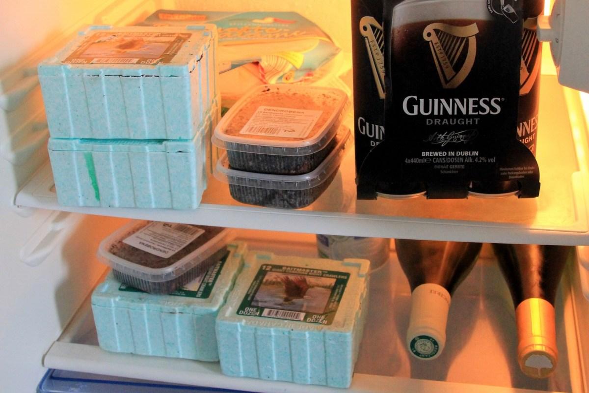 Angelköder im Kühlschrank im Ferienhaus