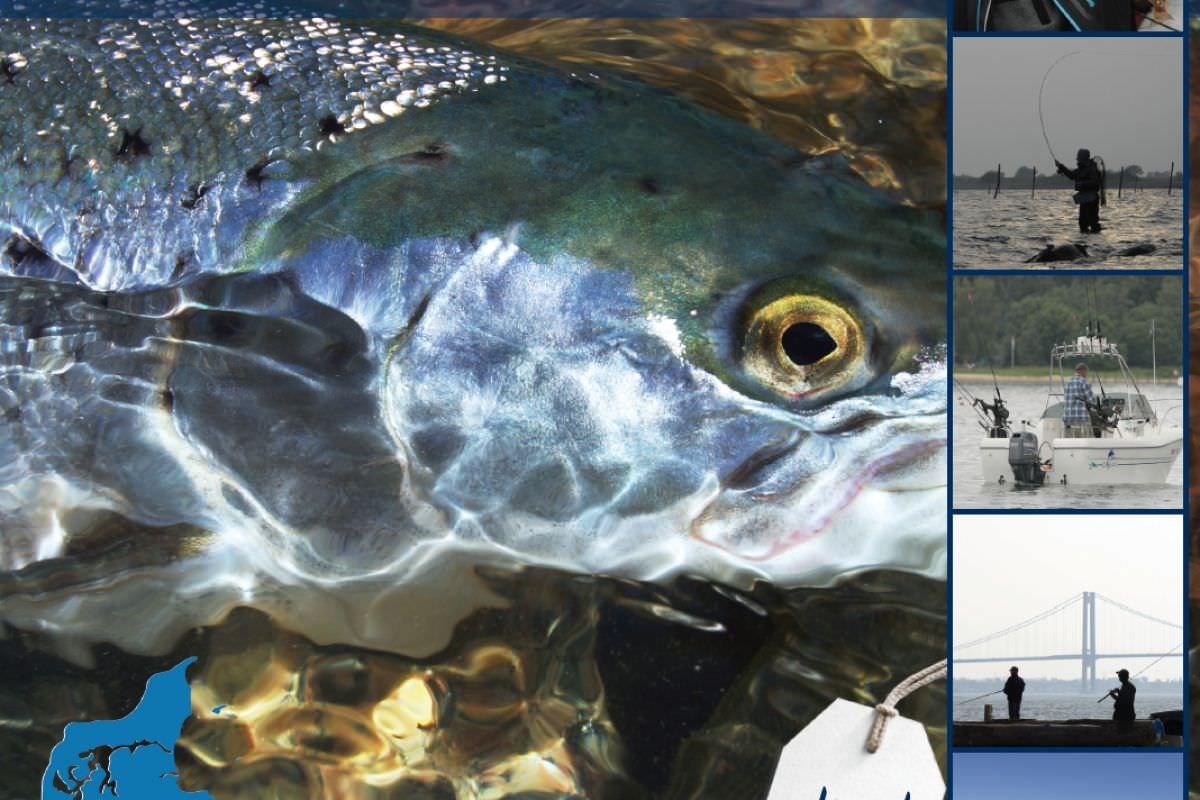 Angelbroschüre Lillebælt Fishing