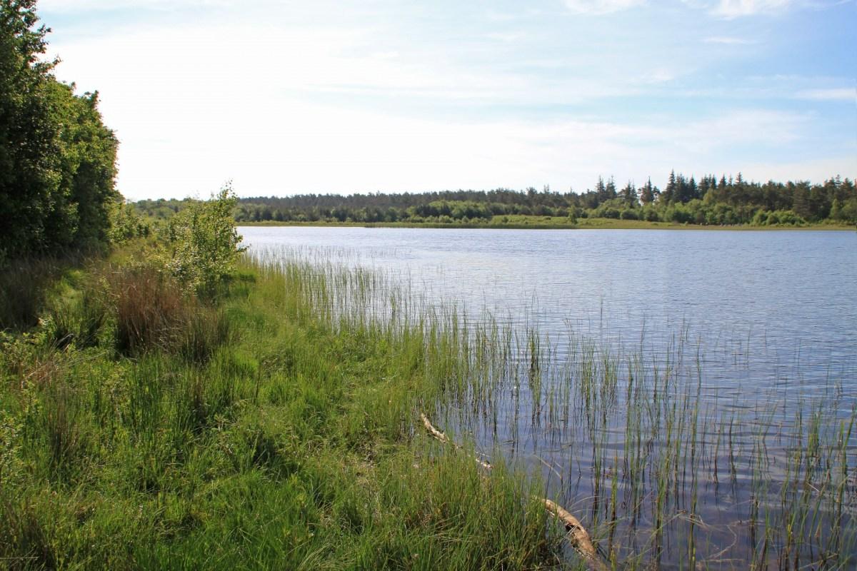 Der Præstesøen bei Oksbøl