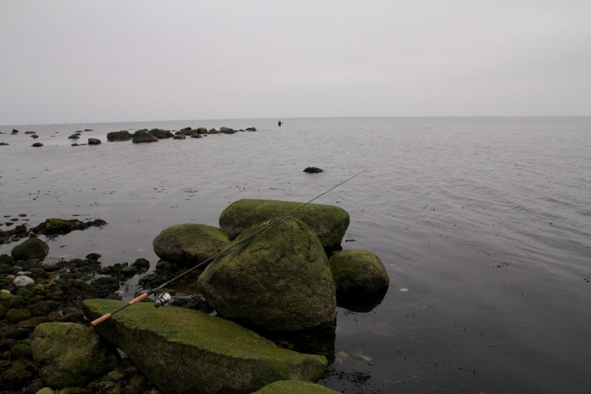Meerforellenangeln vor Højstrup Fælleskov bei Stevns Klint