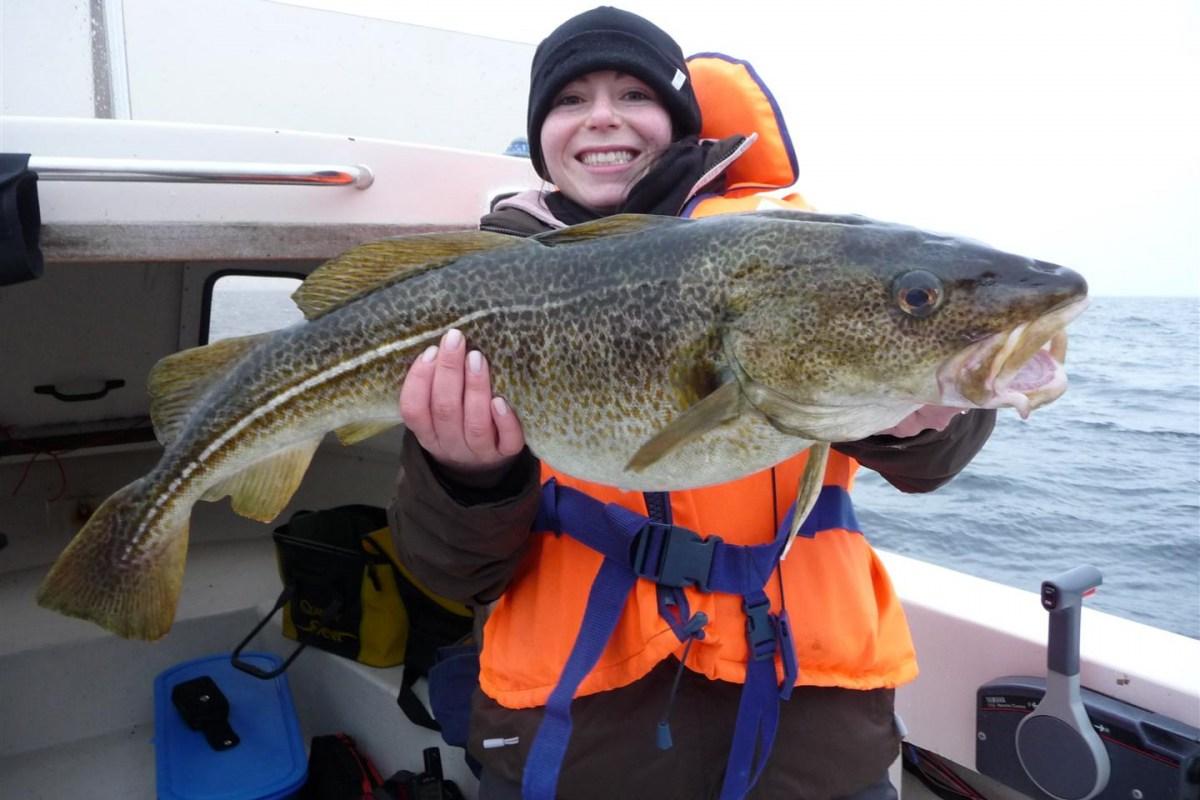Dorsch angeln auf Langeland