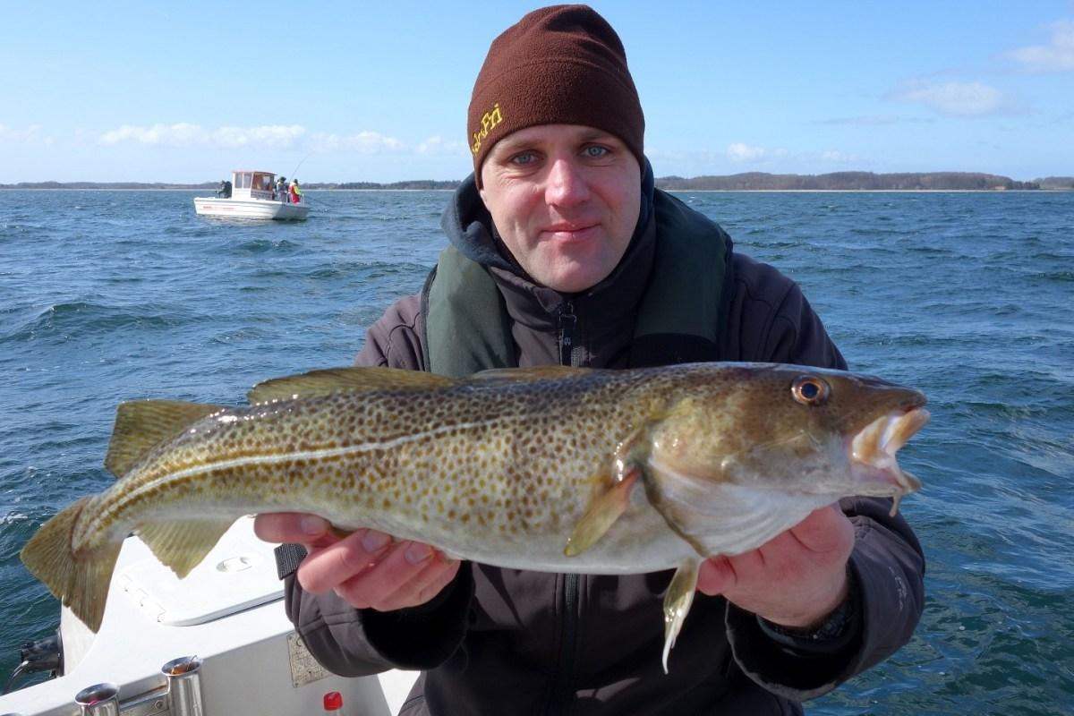 Dorsch angeln vor Langeland