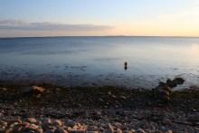 Meerforellen angeln vor Langø
