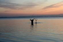 Meerforelle vor Sonnenuntergang im Kescher
