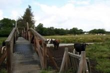 Brücke über die Skjern Au