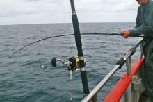Angeln auf dem Gelben Riff