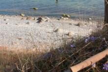 meerforellen angeln auf mön bei fredskov