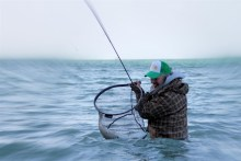 meerforellen angeln auf mön - große meerforelle