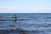 Meerforelle im Drill auf Bornholm