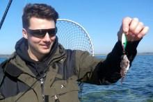 Beifang beim Meerforellen angeln: ein Seeskorpion