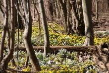 Wald vor Stevns Klint bei Bøgeskov