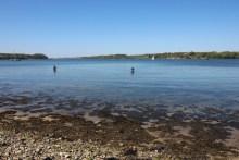 Meerforellenangeln in der Agtrup Vig im Koldingfjord