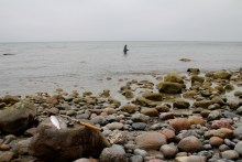 Meerforellenangeln bei Ålebæk Strand auf Møn