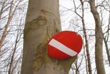 Im Baum eingewachsenes Schild bei Pomlerende auf Møn