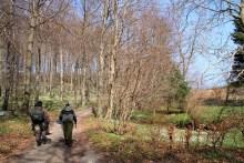 Weg zum Angelplatz Pomlerende auf Møn