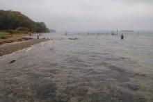 Meerforellenangeln Kleiner Belt bei Stenderup