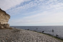 Meerforellenangeln vor Stevns Klint bei Korsnæb