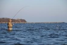 Meerforellenangeln bei Lund vor Stevns Klint