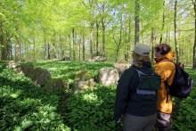Hünengrab und Bärlauch in Dänemark am Kleinen Belt
