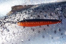 Meerforellenblinker Bornholmerpilen